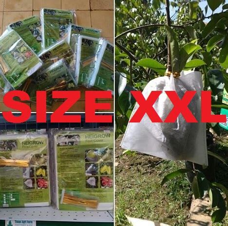 Fruit Cover Pembungkus Buah 30x40 Cm Isi 50 Pcspack Kuning pembungkus buah heigrow 100 lembar bibitbunga