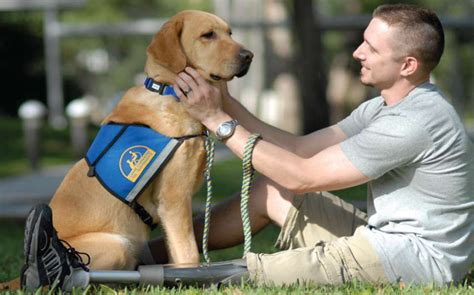 veteran dogs service dogs for veterans act passes the senate but what does that