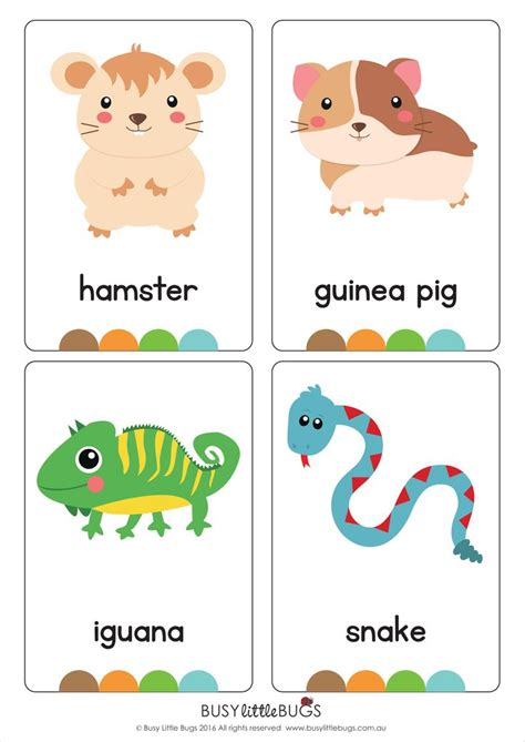 Our Set Of Printable Quot Jungle Animal Flash Cards Quot Are A | 141 best images about flash cards on pinterest earth day