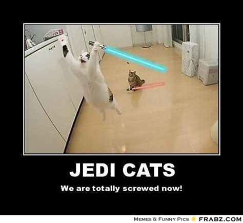 Star Wars Cat Meme - swc star wars meme thread page 42 jedi council forums