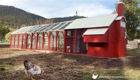 Backyard Chicken Coops Australia Will My Council Allow Me To Keep Chickens