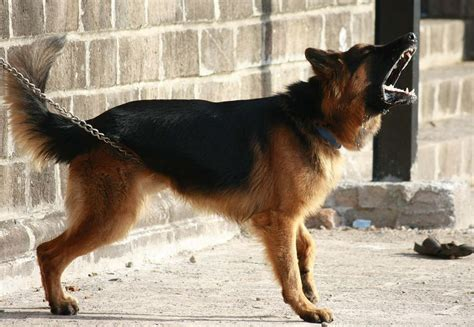 how effective are guard dogs really for home security