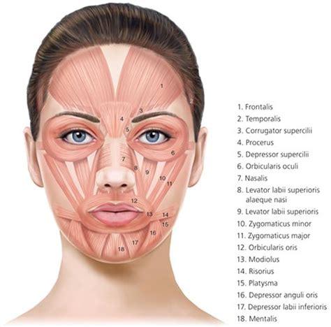 botox specialist 183 laser dermatology 183 dermatologist nyc