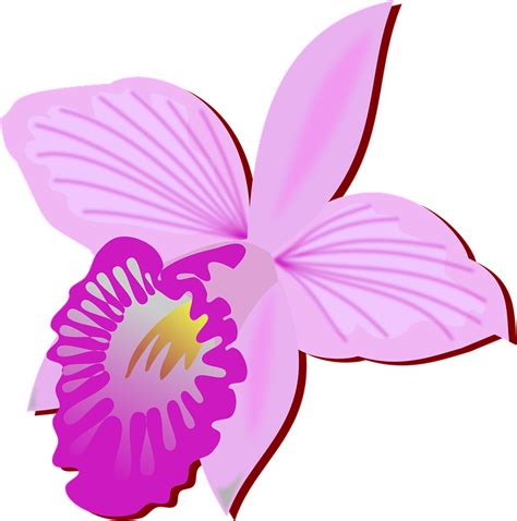 clipart fiore free vector graphic clip flor flora flower free