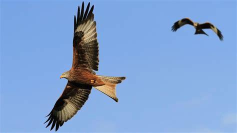 how do birds fly eden s blog eden channel