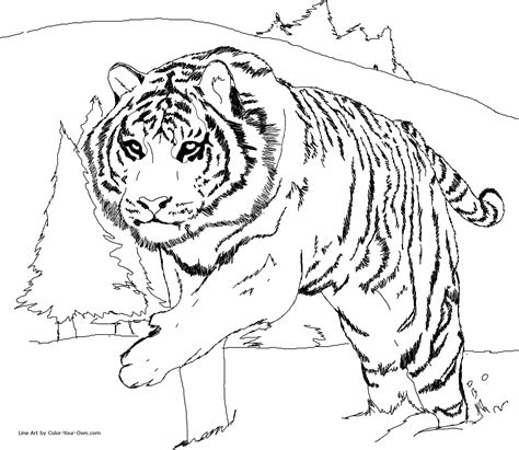 Coloring Pages Siberian Tiger | siberian tiger coloring page