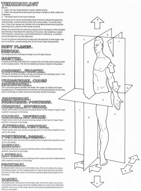 Planes And Anatomical Directions Worksheet Answers by Anatomical Directions Worksheet Worksheets Releaseboard