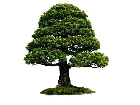 cara membuat gambar background transparan photoshop file png untuk pohon rie fabian