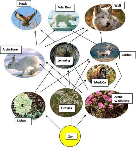 Ecosystem Food Web - The Arctic Wolf