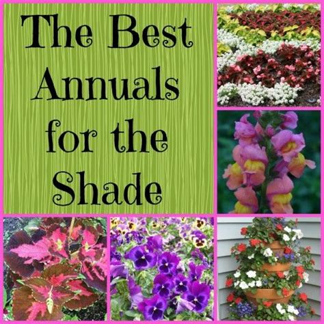 flowers for the shade garden gardening in the shade annual plants for shady areas