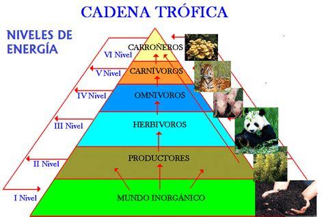 cadenas alimentarias piramides ecologicas 201 tica y entorno 11 2 desarrollo gu 237 a dos