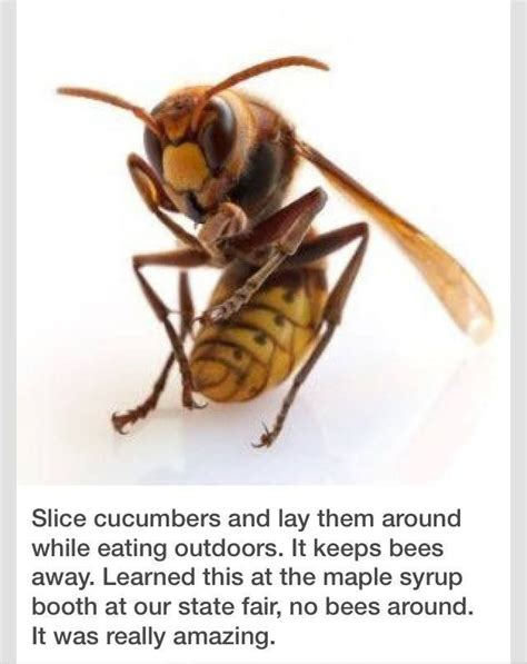 how to get rid of bees in my backyard best 25 getting rid of bees ideas on pinterest bees and