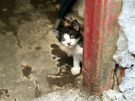 Topi Kucing Putih hitam putih