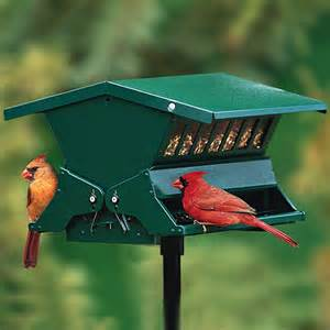 duncraft com absolute ii squirrel proof bird feeder