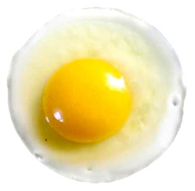 protein in eggs protein in eggs