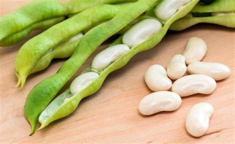 The Bean Lima Comes In Like A by 15 Benefits Of Lima Beans For Skin Hair And Health Find