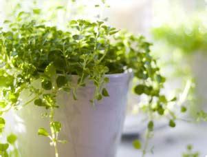 small indoor trees benefits of houseplants indoor gardening miracle gro