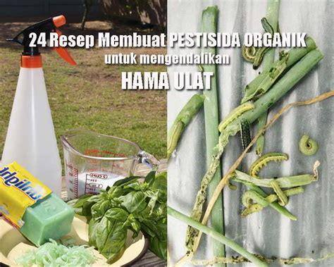 resep pestisida alami bio pestisida  ulat cabai