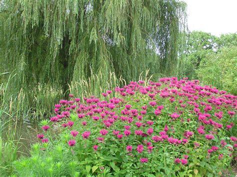Butterfly Gardens by Butterfly Garden Iowa Arboretum