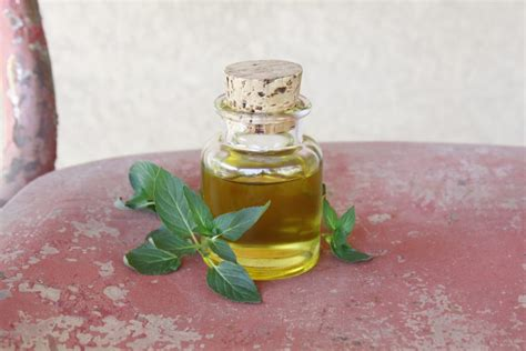 peppermint oil for bed bugs how to use essential oils as a mosquito repellent bug itch treatment