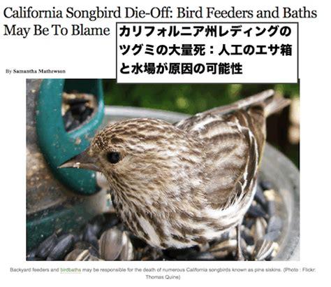 カリフォルニア州レディングで続く 小鳥たちの大量死 2月のツグミに続いて 100羽の死亡したムクドリが発見される
