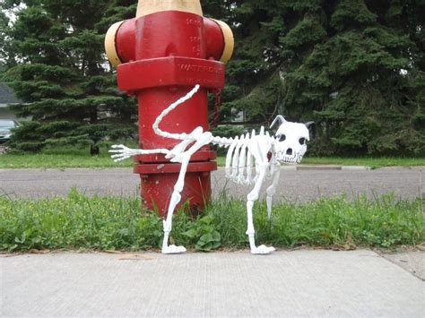 how to stop my dog pissing in the house skeleton dog pissing on a fire hydrant dogs