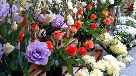 Flower Shop by How To Buy The Best Plants Flowers Fra Dor Landscaping