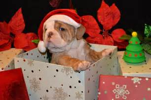 Dogs are the most beautiful christmas gift ever women daily magazine