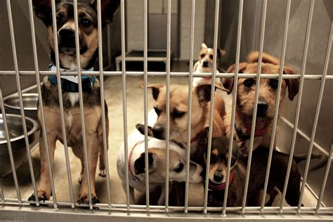 downey pound los angeles county animal facitilies to be examined after cleanliness safety