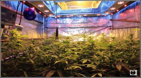 cultivos interior ciclo continuo en cultivos de marihuana de interior