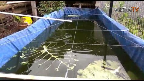 Harga Kolam Terpal Ikan Gurame budidaya ikan gurame kolam terpal lanjutan