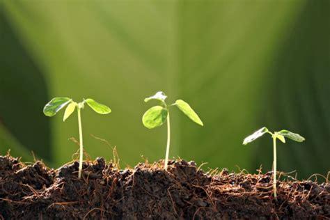 creare un orto in giardino come creare un piccolo orto in giardino ii letteraf