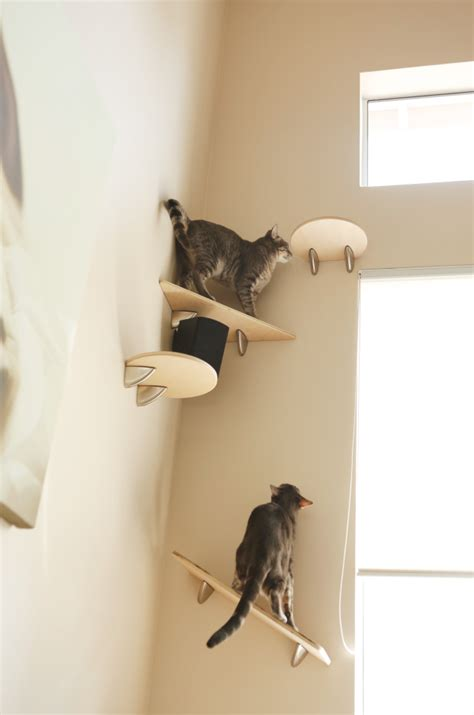 cat wall shelves giggly cats catification