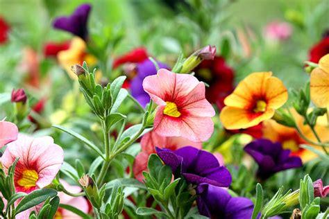 imagenes hermosas y coloridas flores im 225 genes y fotos