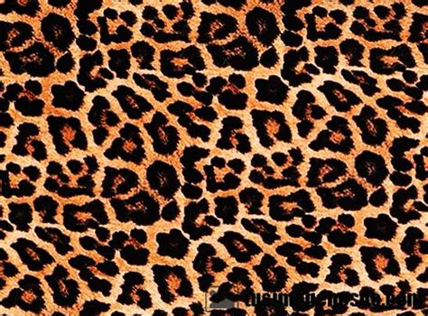 Imagenes Uñas Animal Print | im 225 genes de animal print im 225 genes