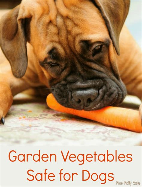 vegetables safe for dogs garden vegetables safe for dogs miss molly says