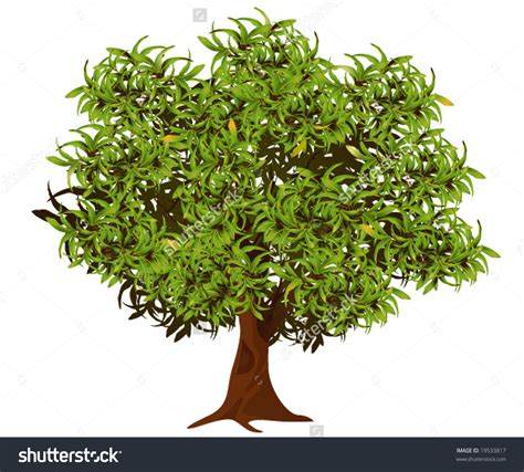 coloring pages of neem tree neem tree clipart 101 clip art
