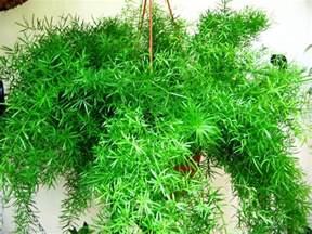 Winter Gardening Jobs - hanging plants for indoors summerhill garden centre