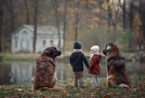 dogs by andy big dogs big breeds picture