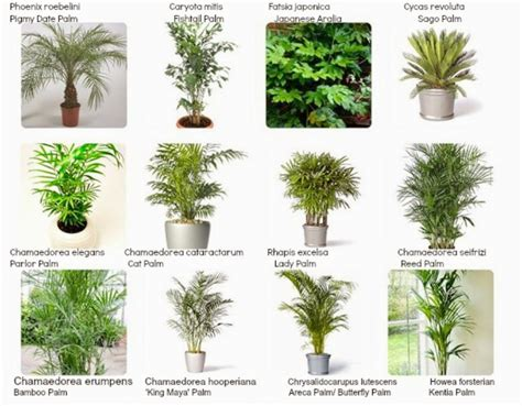 indoor plant images with names awesome house plants names and pictures interiorscaping compendium indoor plant identification