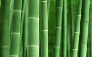 hq wallpapers bamboo forest high definition pictures 1920x1200 wallpapers