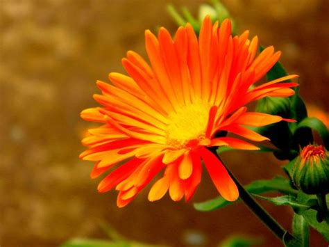 colorful flowers picture orange flowers in bloom light orange flower picture bright colored flower in bloom