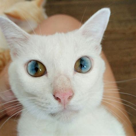 cats with different colored through golden this cat s a whole universe