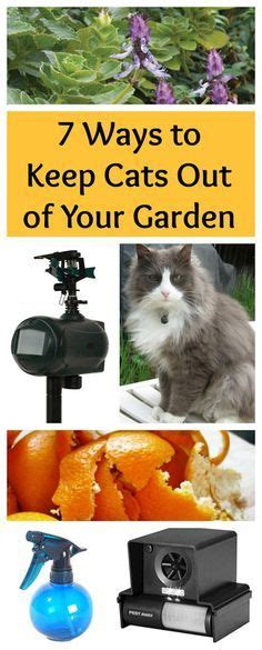 how to keep cats out of your backyard keep cats out of garden with coffee grounds citrus peels