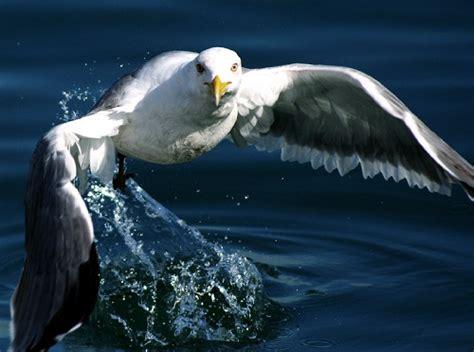 imagenes de animales nuevas especies las mejores fotos de animales