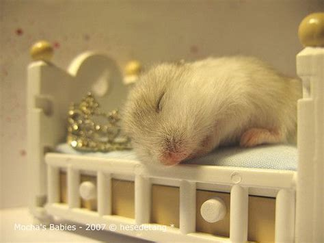 hamster bed hamster sleeping