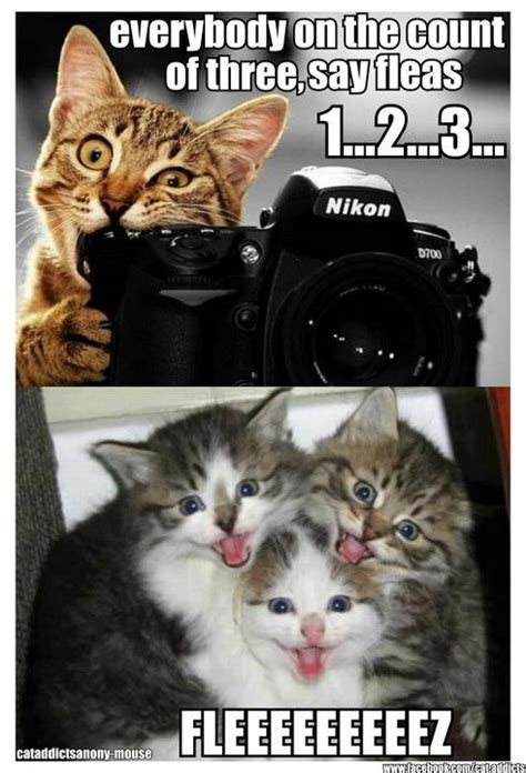 Cute Funny Cat Memes - everybody on the count cat meme cat planet cat planet