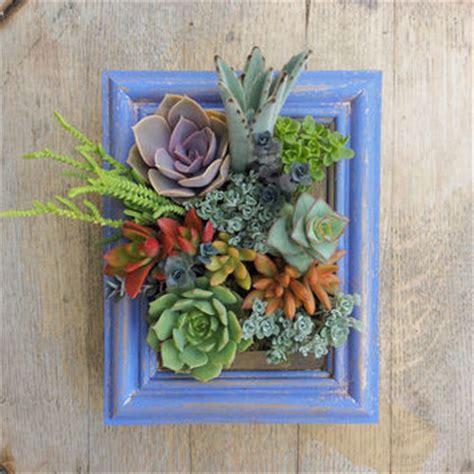 Vertical Succulent Garden Frame Picture Frame Vertical Succulent Garden From