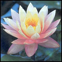 fiore simbolo della famiglia simboli della cultura giapponese