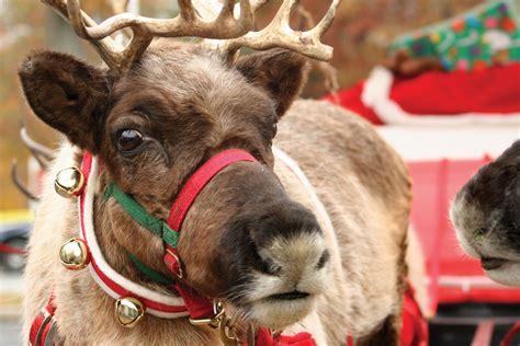 images of christmas reindeer afflictor com 183 fake